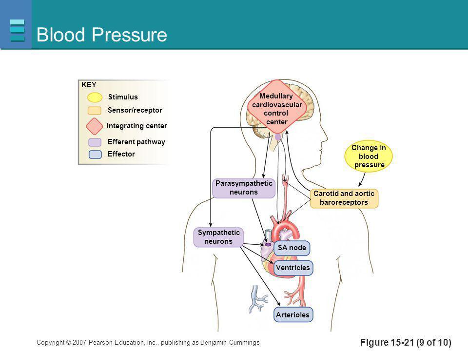 Blood Pressure Figure 15-21 (9 of 10) KEY Stimulus Medullary