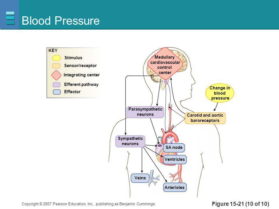 Blood Pressure Figure 15-21 (10 of 10) KEY Stimulus Medullary