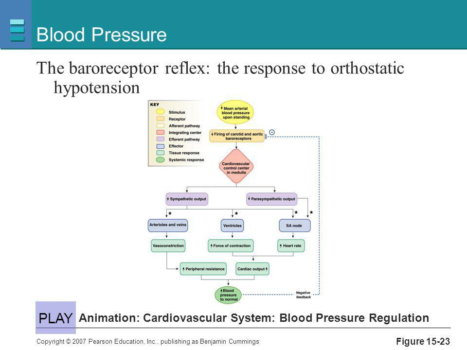 Blood Pressure The baroreceptor reflex: the response to orthostatic hypotension. PLAY. Animation: Cardiovascular System: Blood Pressure Regulation.