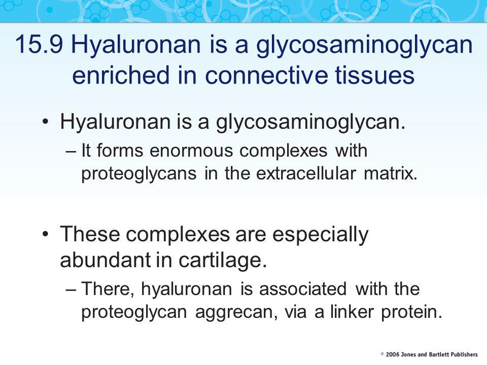 15.9 Hyaluronan is a glycosaminoglycan enriched in connective tissues