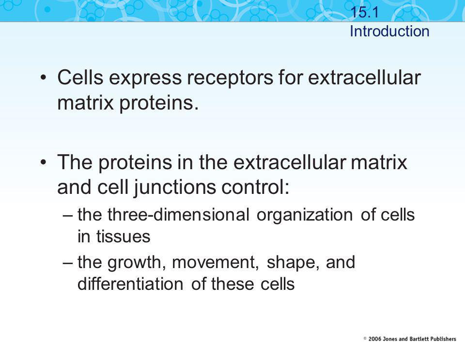 Cells express receptors for extracellular matrix proteins.
