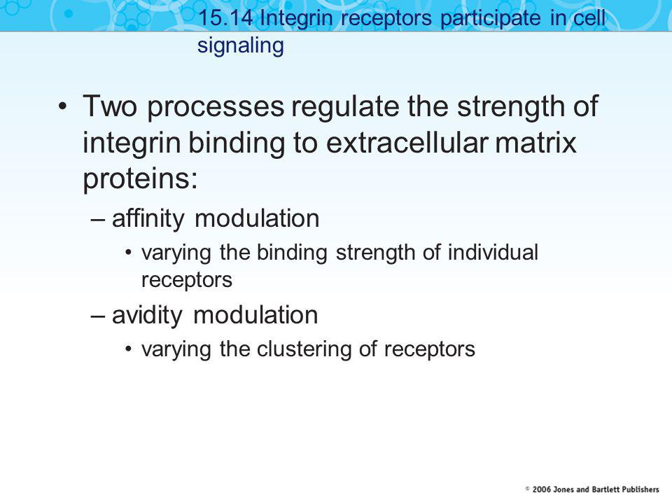 15.14 Integrin receptors participate in cell signaling