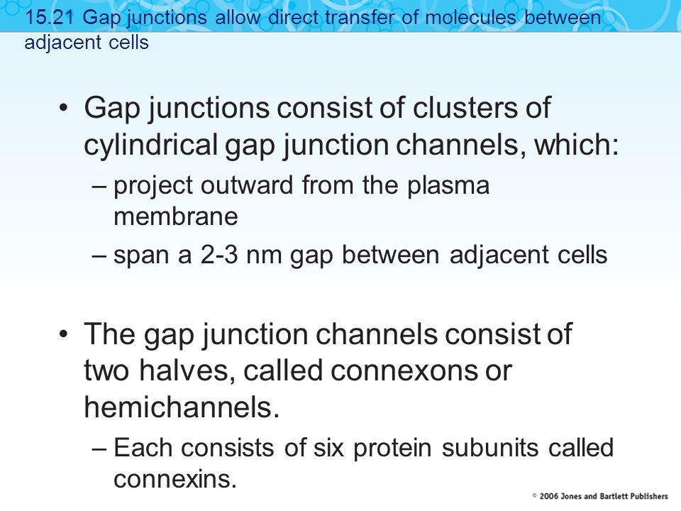 15.21 Gap junctions allow direct transfer of molecules between adjacent cells