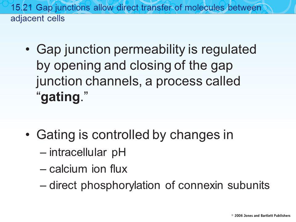 Gating is controlled by changes in