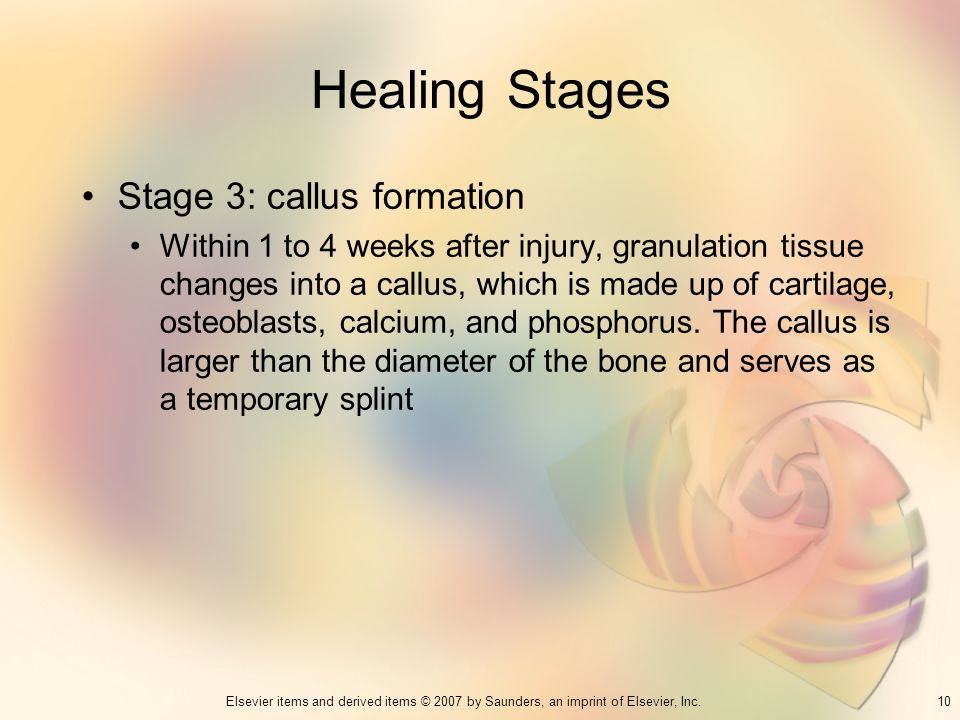 Healing Stages Stage 3: callus formation