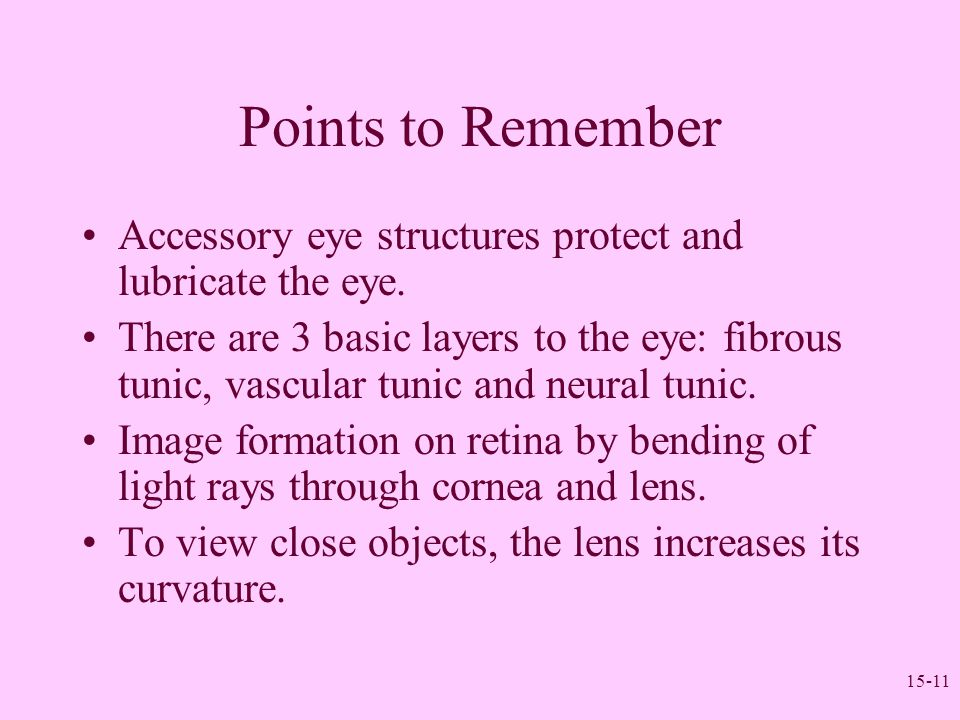 Points to Remember Accessory eye structures protect and lubricate the eye.