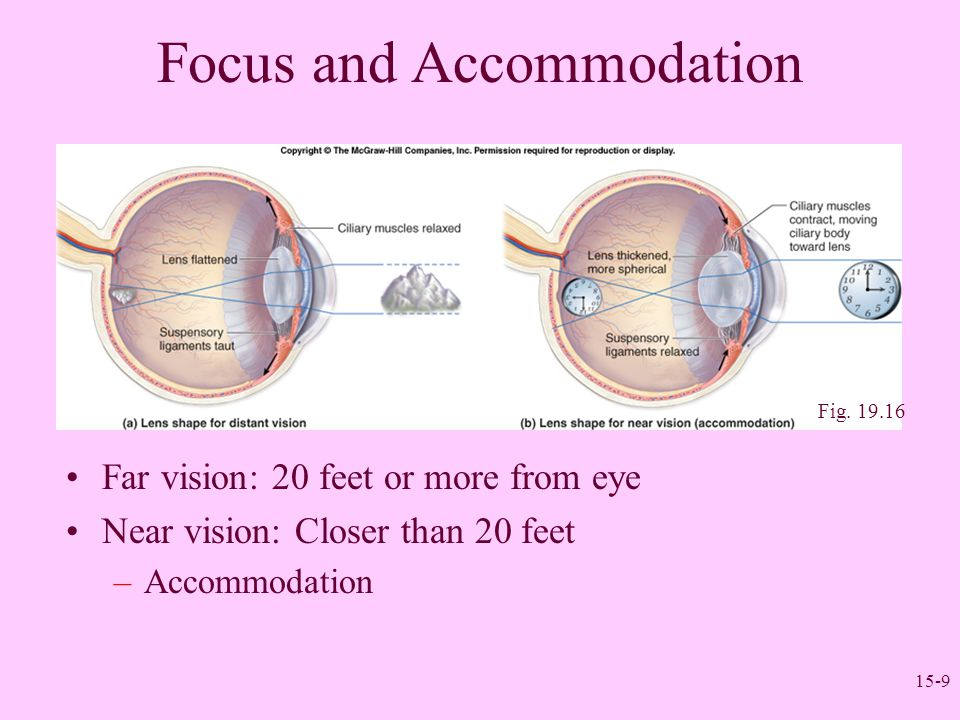 Focus and Accommodation