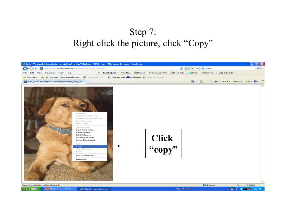 Step 7: Right click the picture, click Copy