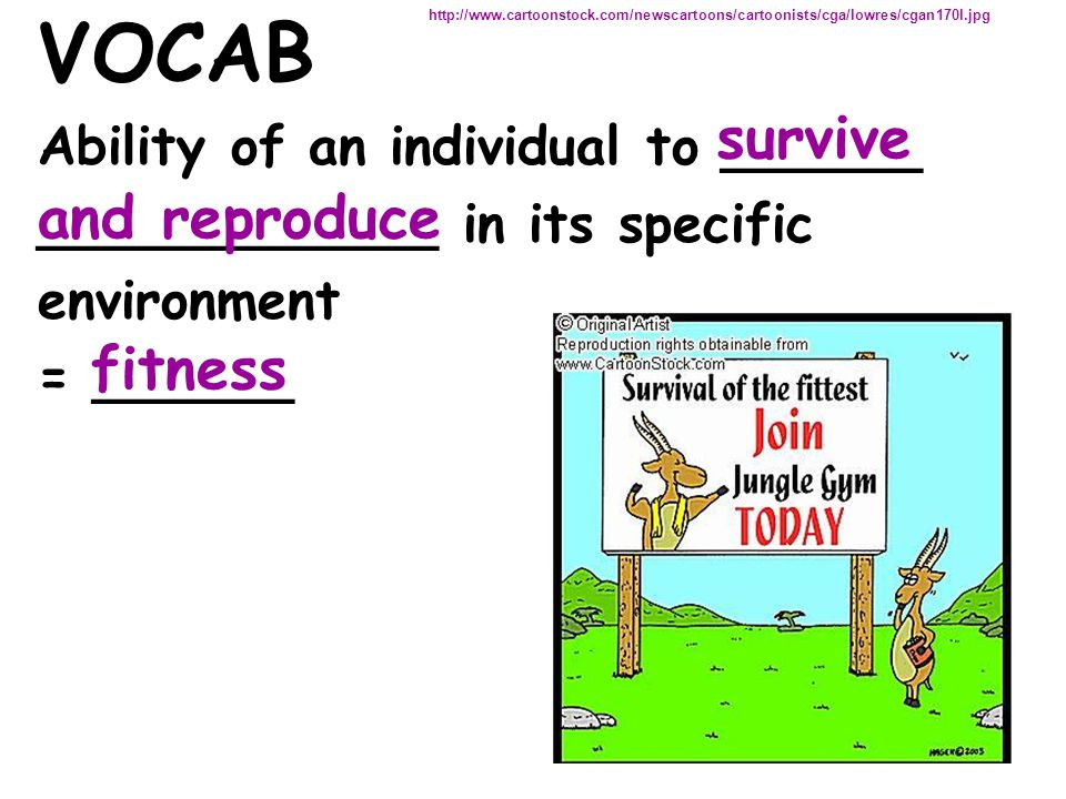 VOCAB survive and reproduce fitness Ability of an individual to ______