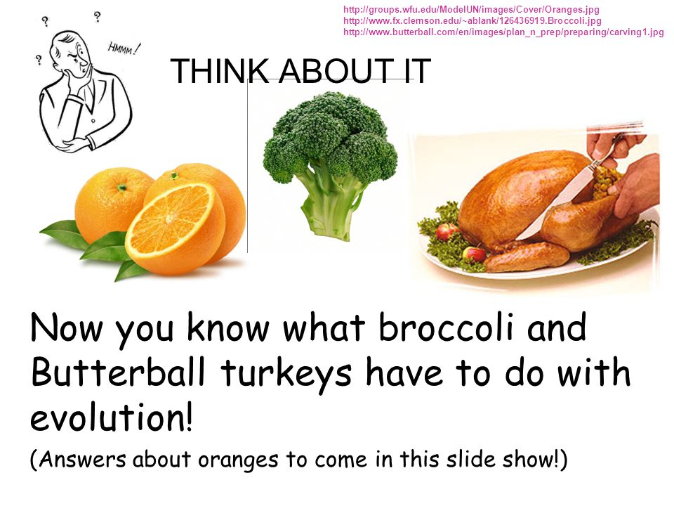 http://groups.wfu.edu/ModelUN/images/Cover/Oranges.jpg http://www.fx.clemson.edu/~ablank/126436919.Broccoli.jpg.