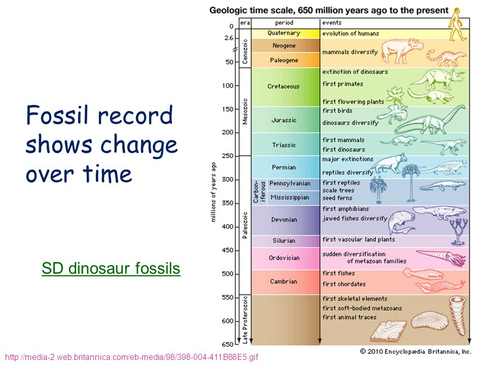 Fossil record shows change over time