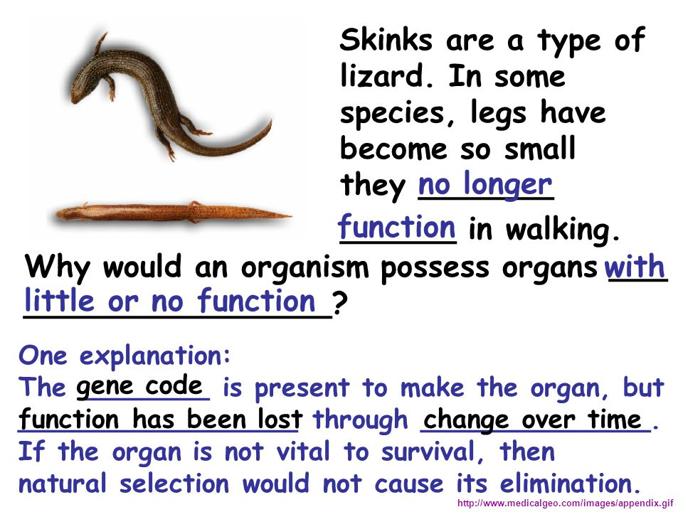 Why would an organism possess organs ___ ________________ with