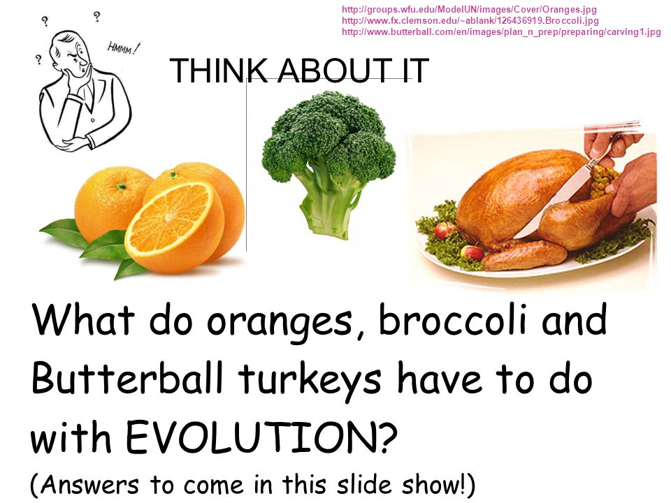 What do oranges, broccoli and Butterball turkeys have to do