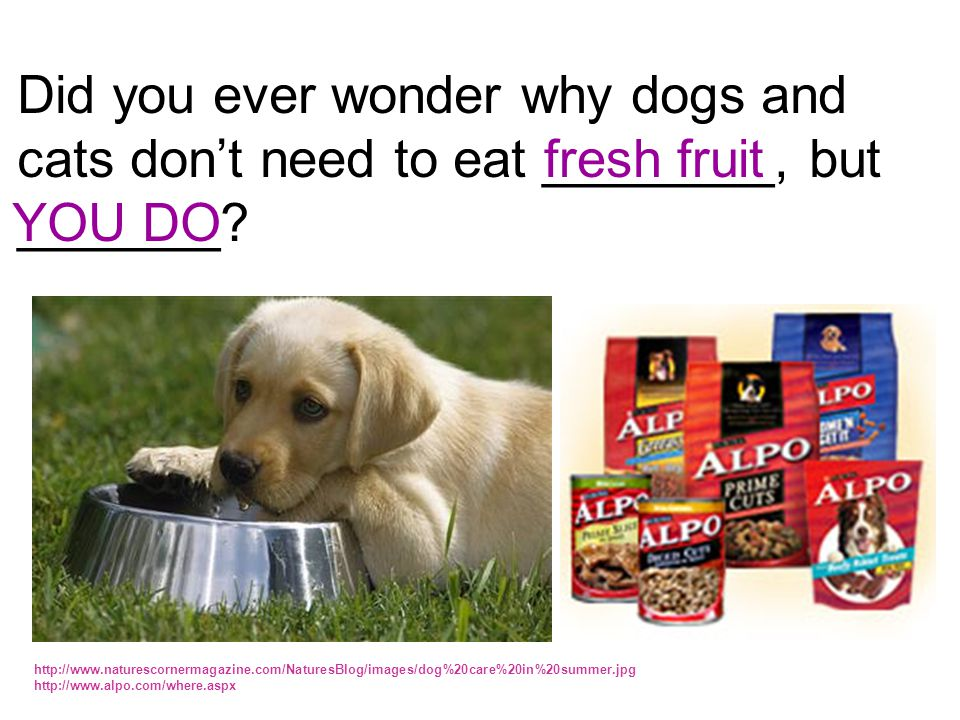 Did you ever wonder why dogs and cats don't need to eat ________, but
