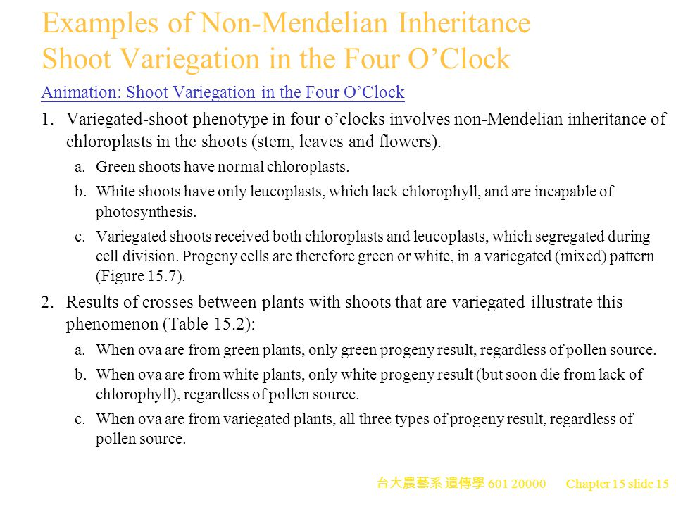 Examples of Non-Mendelian Inheritance Shoot Variegation in the Four O'Clock