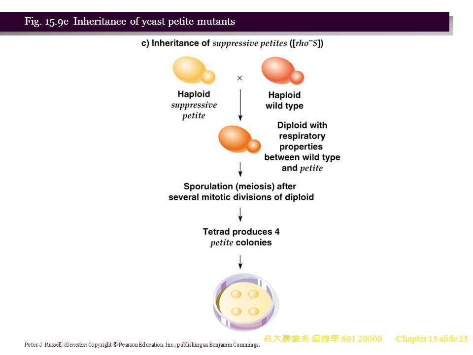 Fig. 15.9c Inheritance of yeast petite mutants