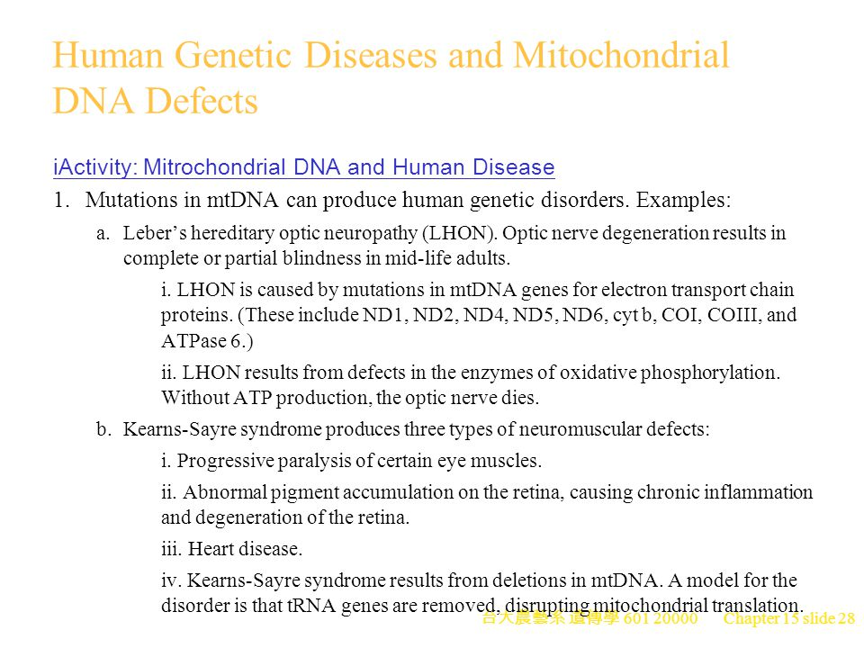 Human Genetic Diseases and Mitochondrial DNA Defects