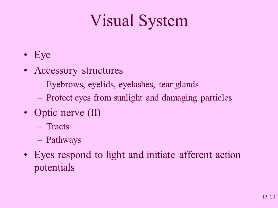 Visual System Eye Accessory structures Optic nerve (II)
