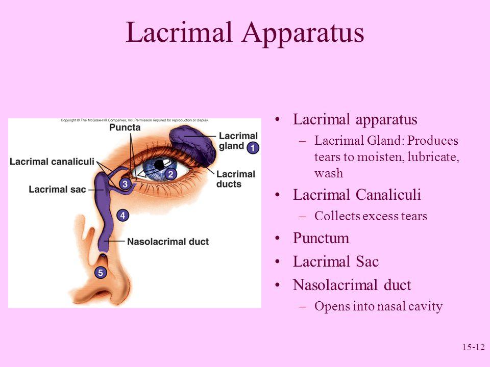 Lacrimal Apparatus Lacrimal apparatus Lacrimal Canaliculi Punctum