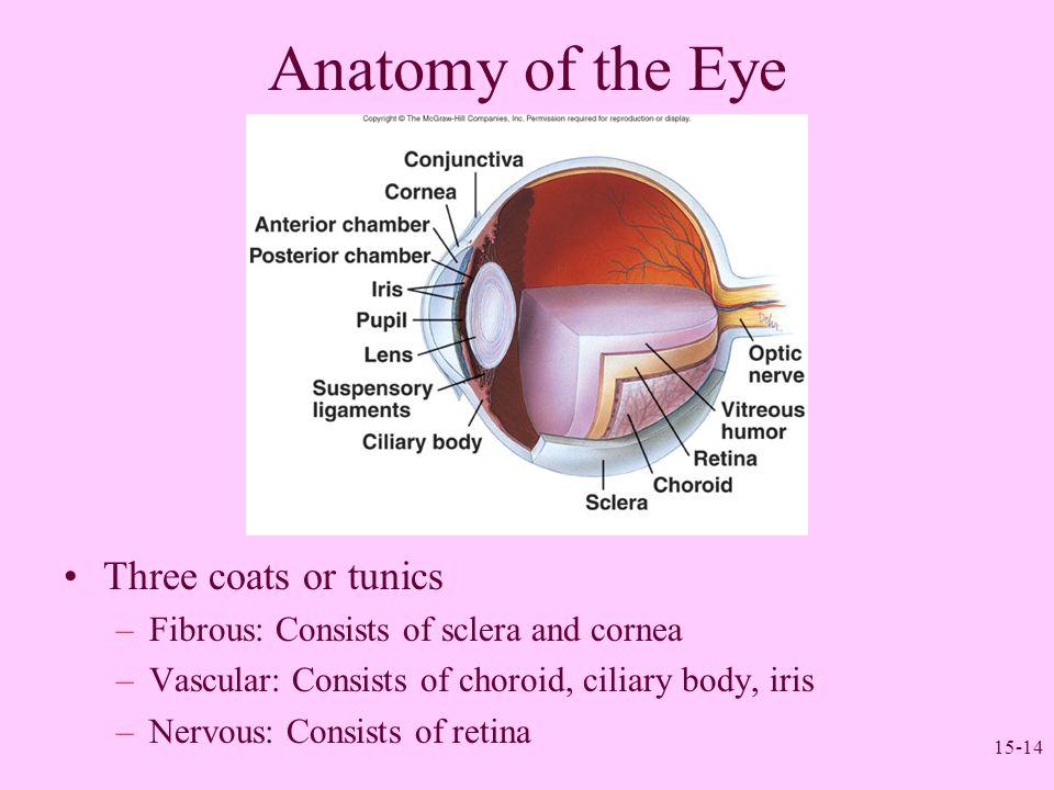 Anatomy of the Eye Three coats or tunics