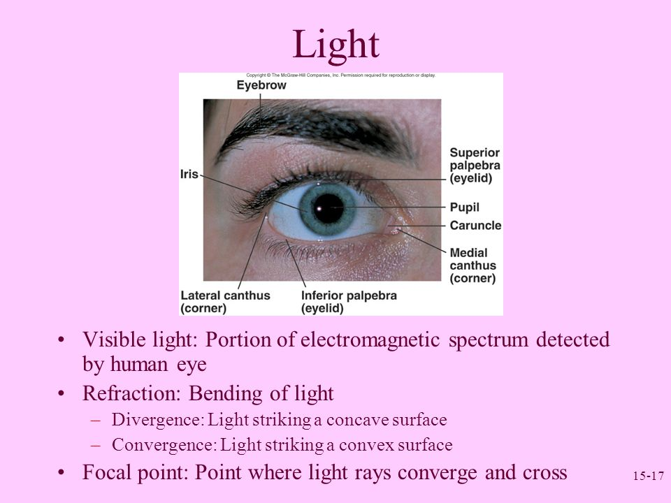 Light Visible light: Portion of electromagnetic spectrum detected by human eye. Refraction: Bending of light.