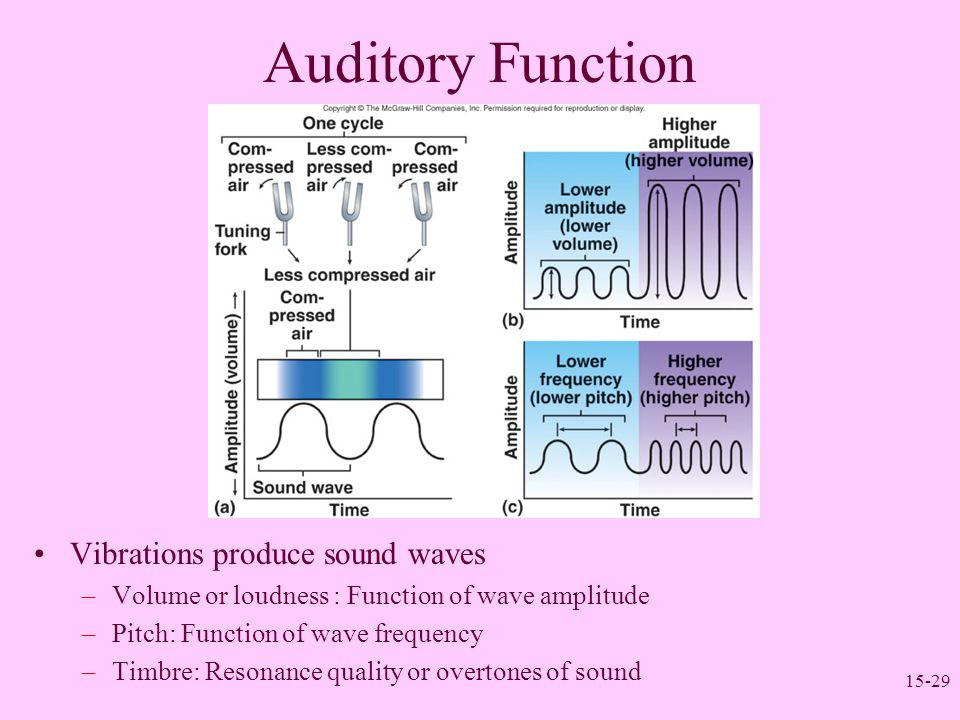 Auditory Function Vibrations produce sound waves