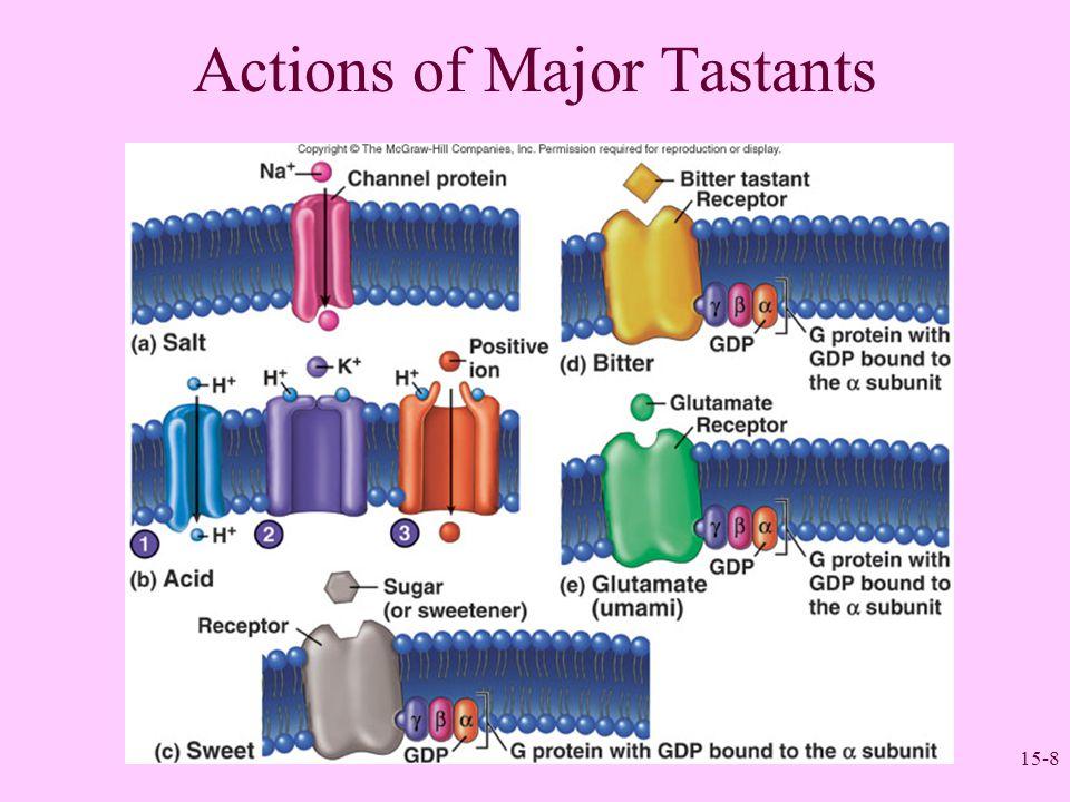 Actions of Major Tastants