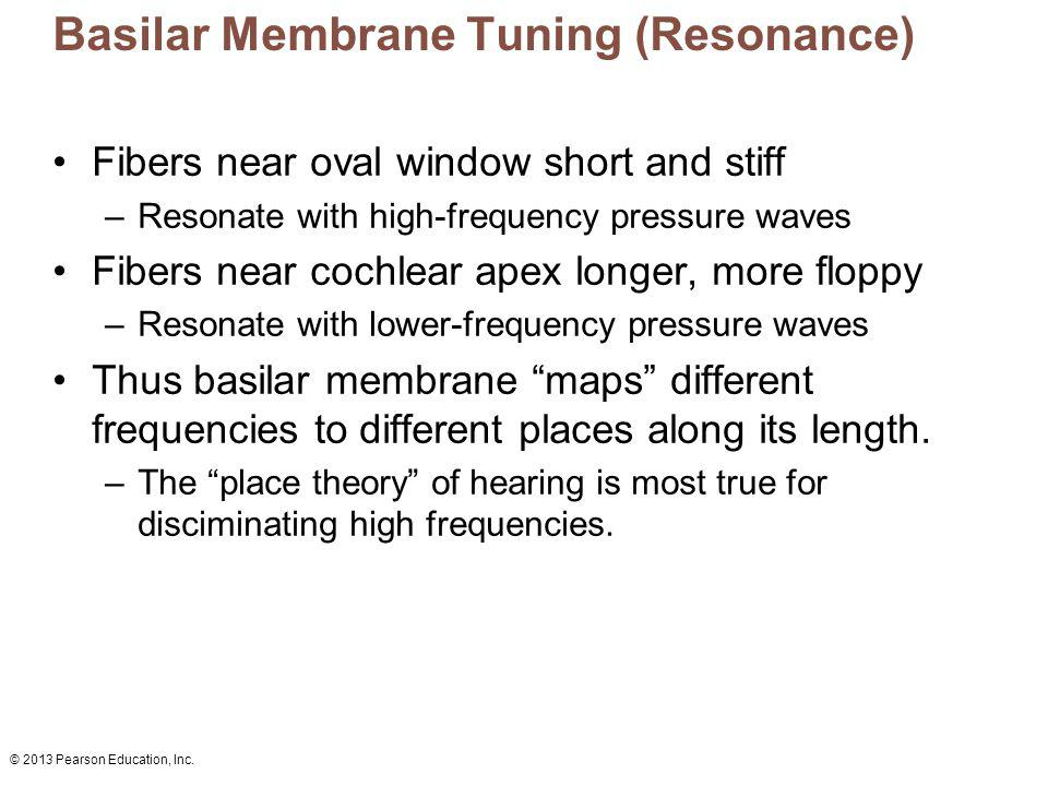 Basilar Membrane Tuning (Resonance)