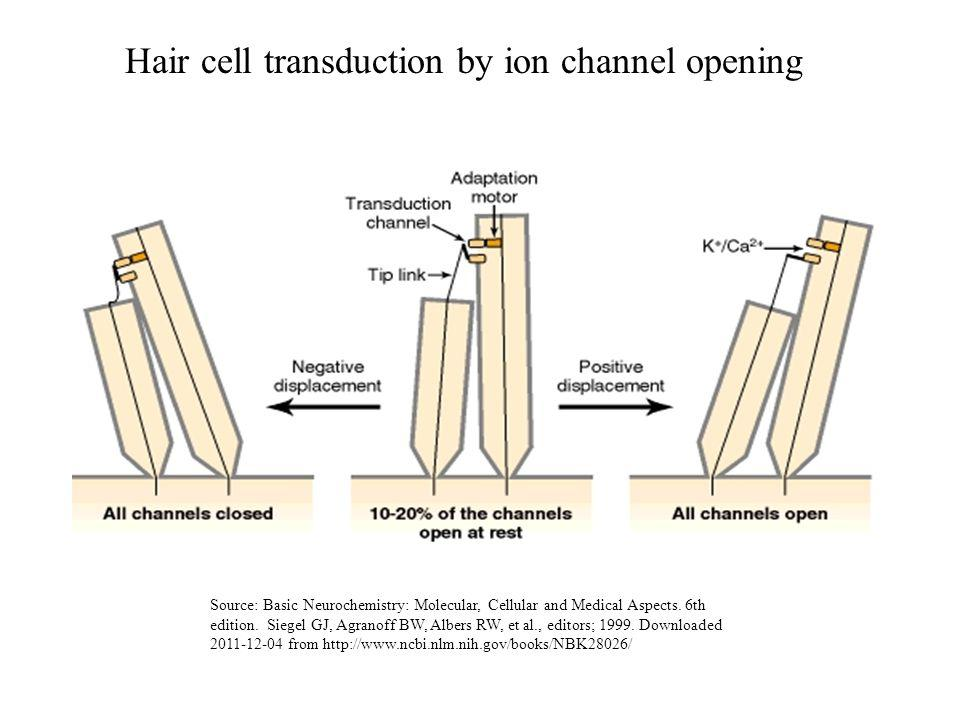 Hair cell transduction by ion channel opening