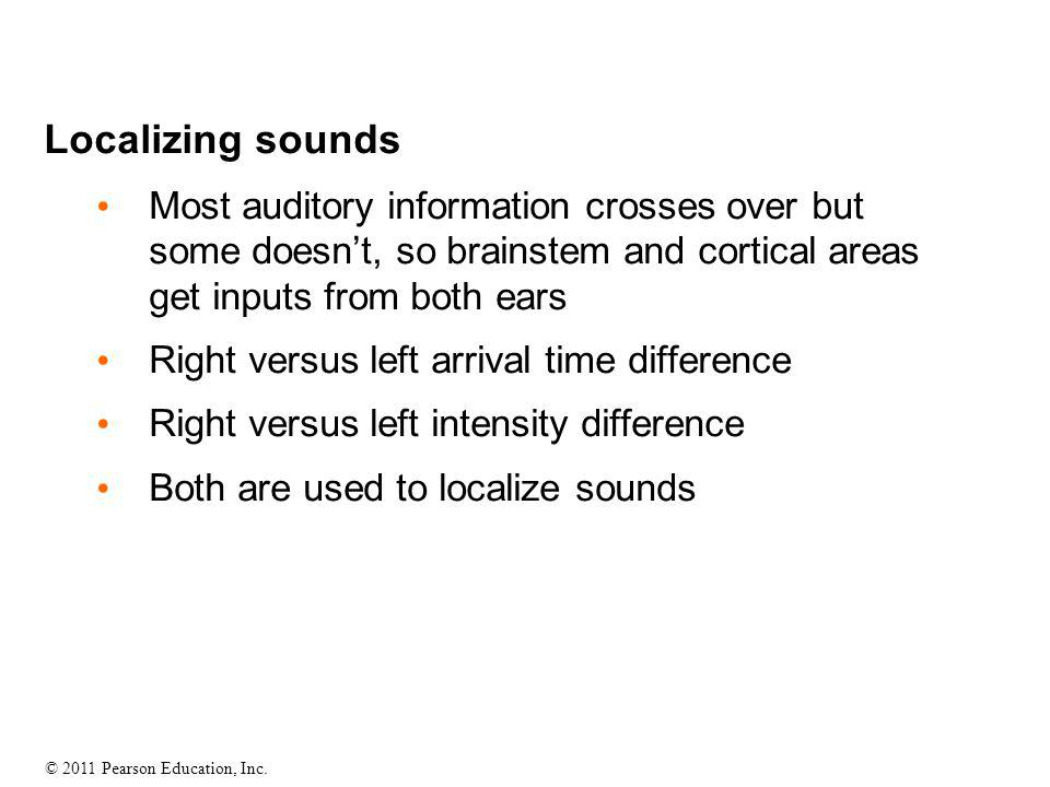 Localizing sounds Most auditory information crosses over but some doesn't, so brainstem and cortical areas get inputs from both ears.