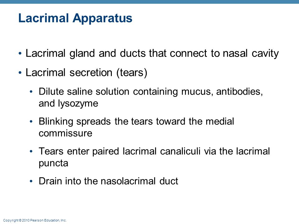Lacrimal Apparatus Lacrimal gland and ducts that connect to nasal cavity. Lacrimal secretion (tears)