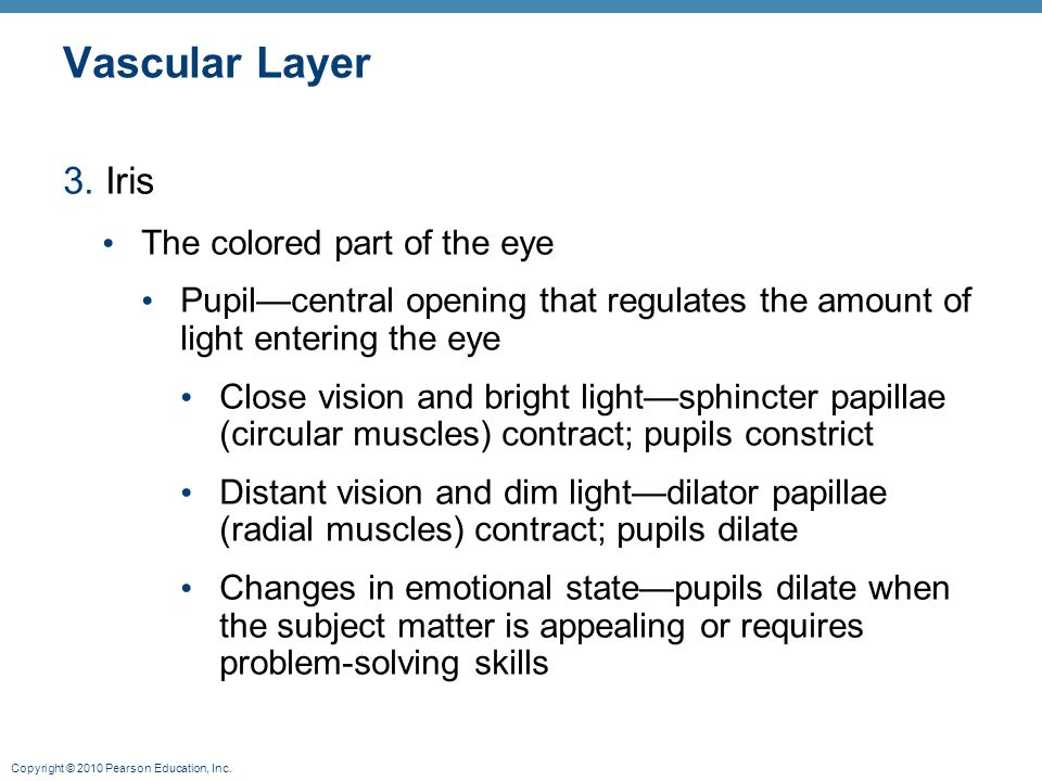 Vascular Layer 3. Iris The colored part of the eye