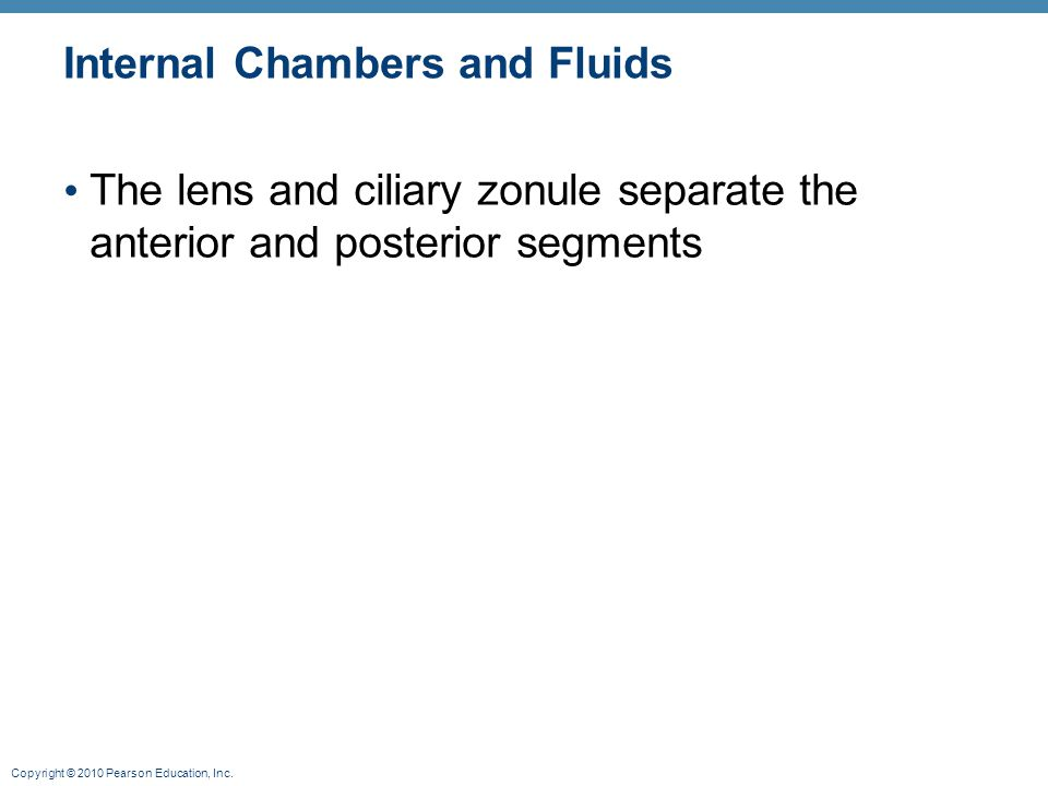 Internal Chambers and Fluids