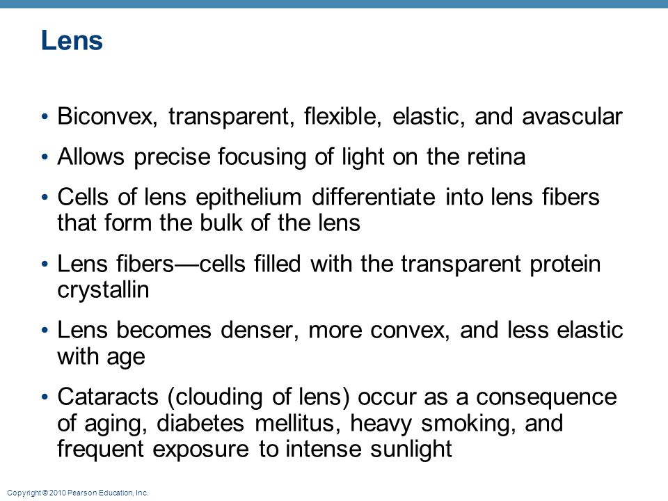 Lens Biconvex, transparent, flexible, elastic, and avascular