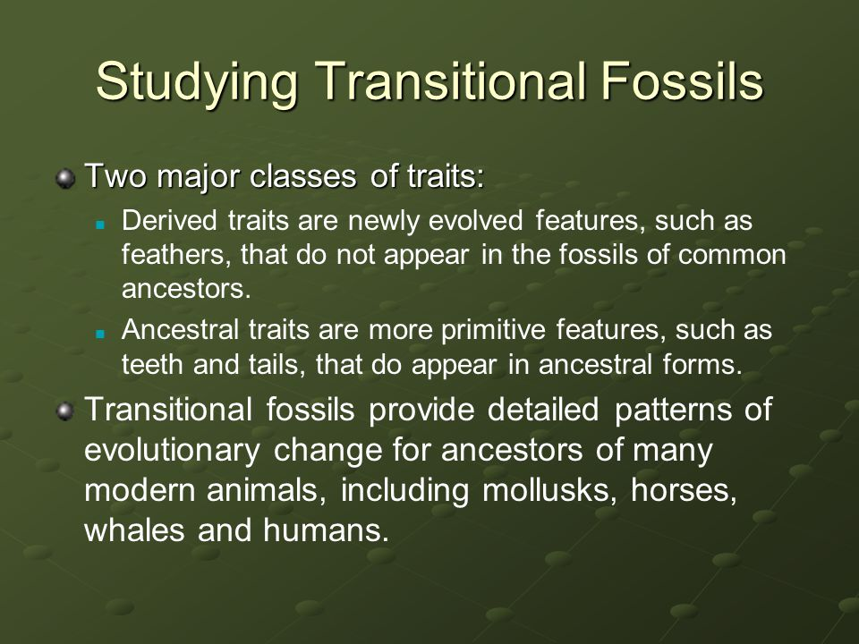 Studying Transitional Fossils