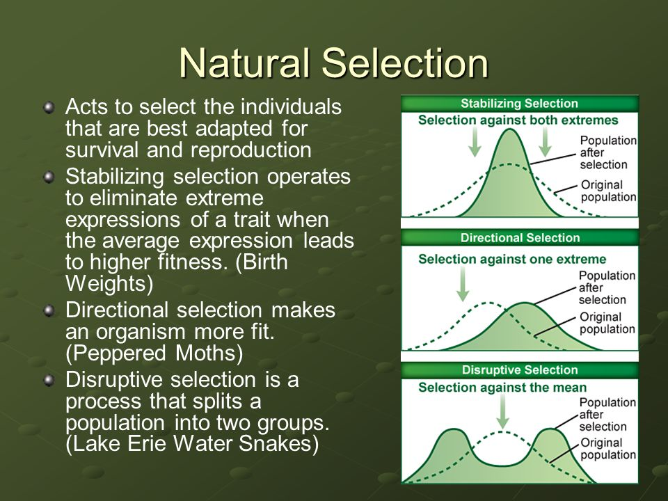 Natural Selection Acts to select the individuals that are best adapted for survival and reproduction.