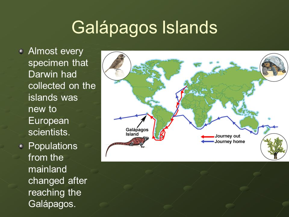 Galápagos Islands Almost every specimen that Darwin had collected on the islands was new to European scientists.