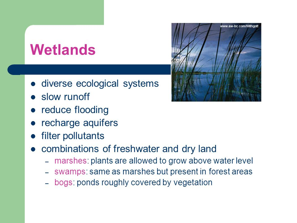 Wetlands diverse ecological systems slow runoff reduce flooding