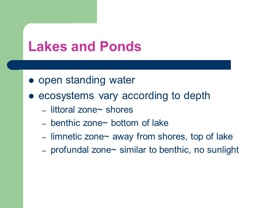 Lakes and Ponds open standing water ecosystems vary according to depth