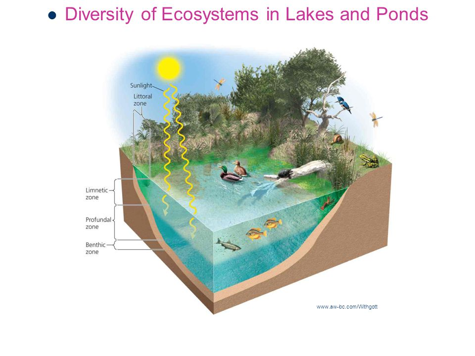 Diversity of Ecosystems in Lakes and Ponds