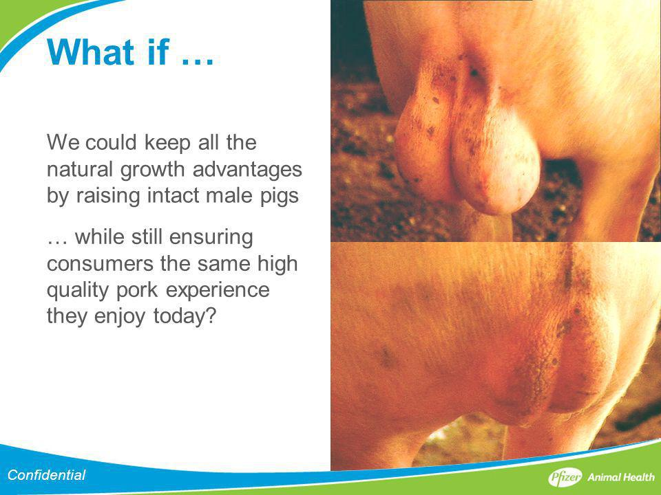 What if … We could keep all the natural growth advantages by raising intact male pigs.
