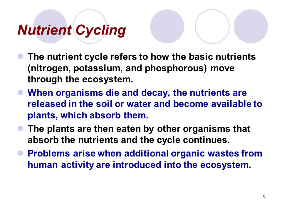 Nutrient Cycling The nutrient cycle refers to how the basic nutrients (nitrogen, potassium, and phosphorous) move through the ecosystem.