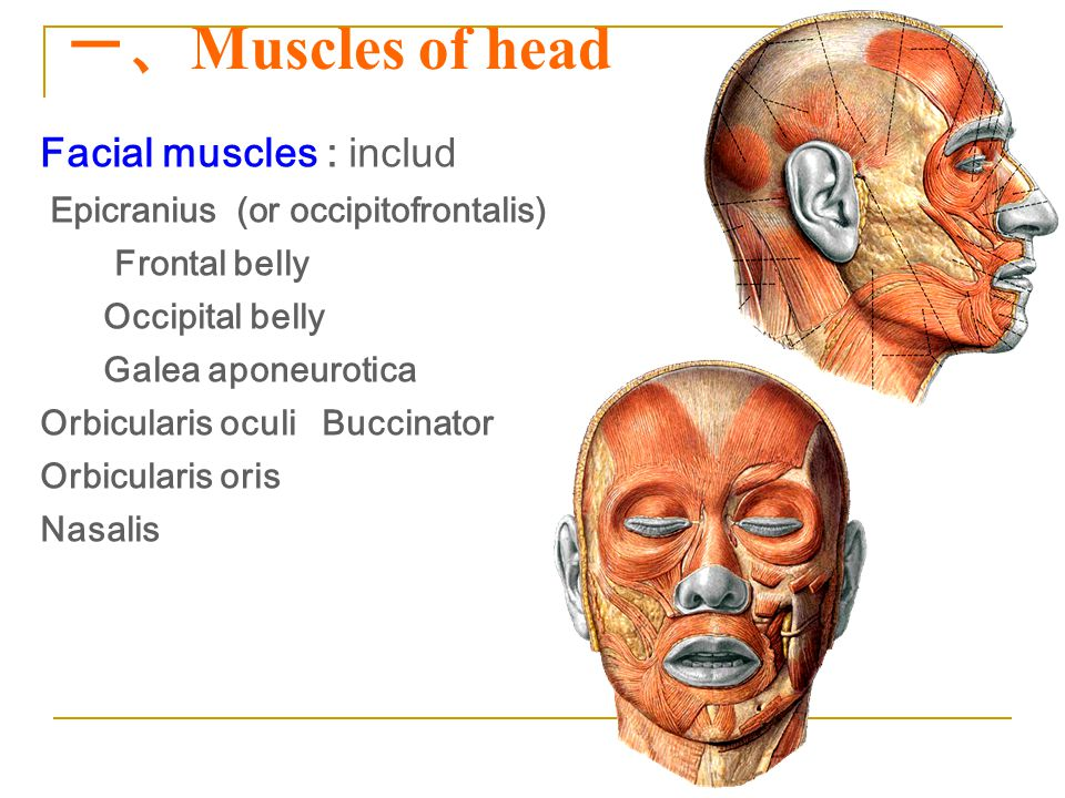 一、Muscles of head Facial muscles : includ