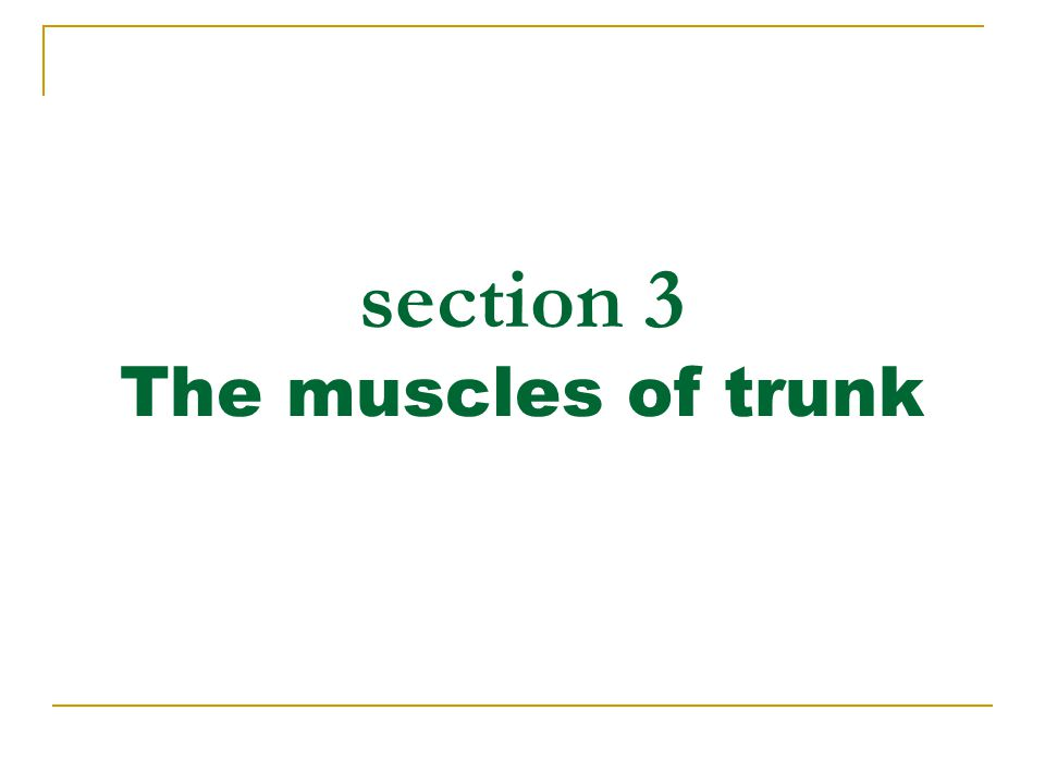 section 3 The muscles of trunk