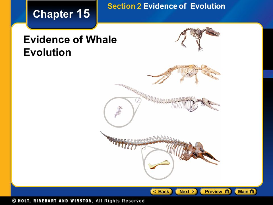 Evidence of Whale Evolution