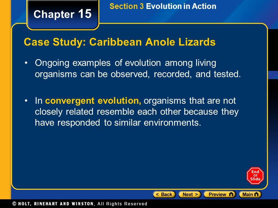 Case Study: Caribbean Anole Lizards