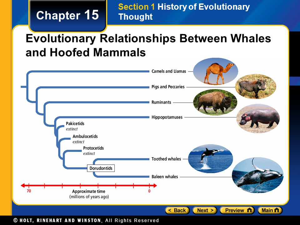 Evolutionary Relationships Between Whales and Hoofed Mammals