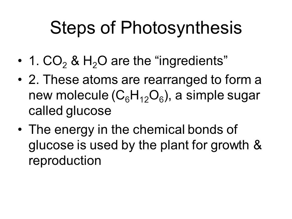 Steps of Photosynthesis