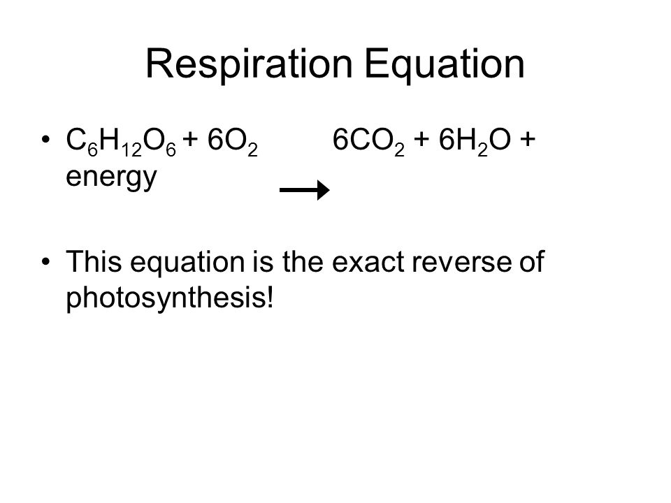 Respiration Equation C6H12O6 + 6O2 6CO2 + 6H2O + energy