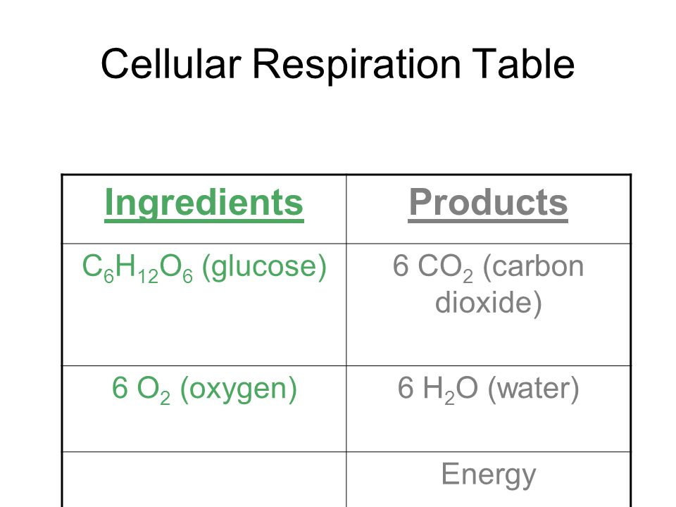 Cellular Respiration Table